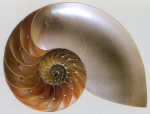 The Golden Spiral balance of habit and novelty. A living metaphor of sustainable, holistic growth, development, and evolution.